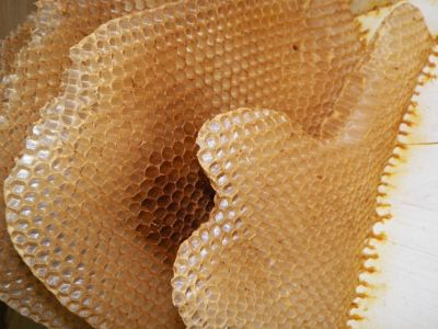 Beekeeping: What all the buzz is about