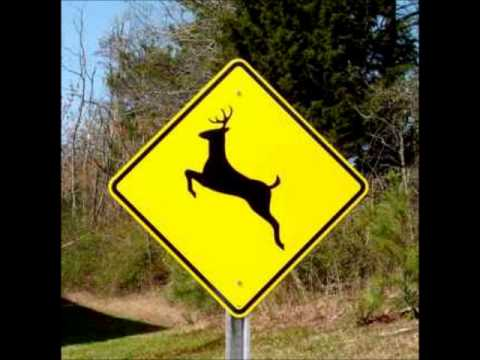 Car Versus Deer In Adair County