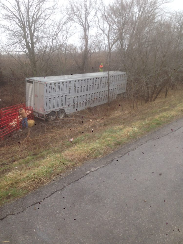 Cattle Hauler Wreck Slows U.S. 65 Traffic