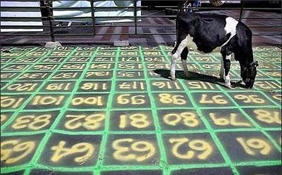 CowPatty Bingo