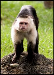 Police: Beware Monkey Loose in Chillicothe