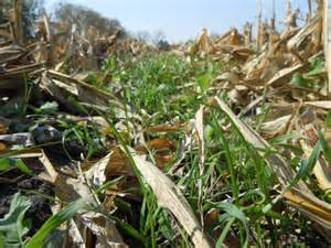 New guide offers cover crop information to farmers
