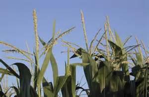 Crop Progress, Condition Report