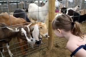 Carrollton FFA Hosting Petting Zoo