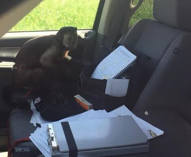UPDATE: Harley's Safe at Home After Livingston County Deputy Responds to Caller Sighting