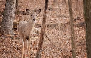 Changes Being Considered For Deer Season