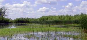 MDC To Offer Wetlands Field Day