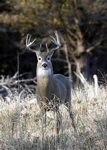 MDC makes changes due to CWD
