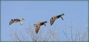 MDC waterfowl reservations still open