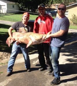 flathead-catfish-1-2015-mcconkey_crop