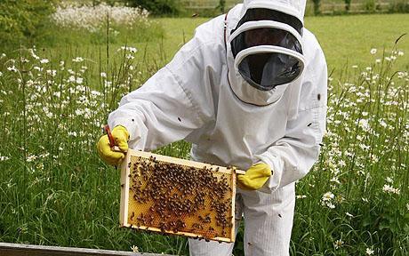 Beekeepers file lawsuit against the EPA