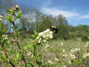 7th Annual Agroforestry Symposium to focus on Pollinators