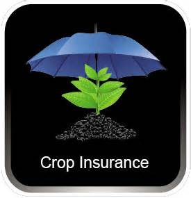 Congress urged to protect crop insurance