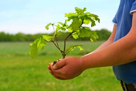 Celebrate Arbor Day by planting a tree
