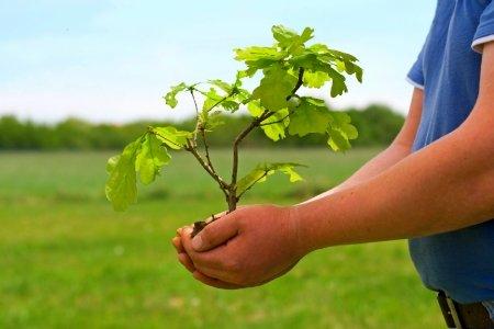 Celebrate Missouri trees with MDC through April Arbor Days