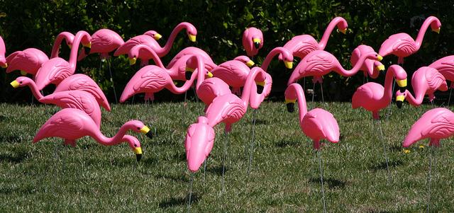 The annual Flocking of the Flamingos takes flight