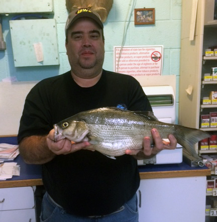 Record setting white bass caught on Table Rock Lake: Six record fish caught this year in Missouri