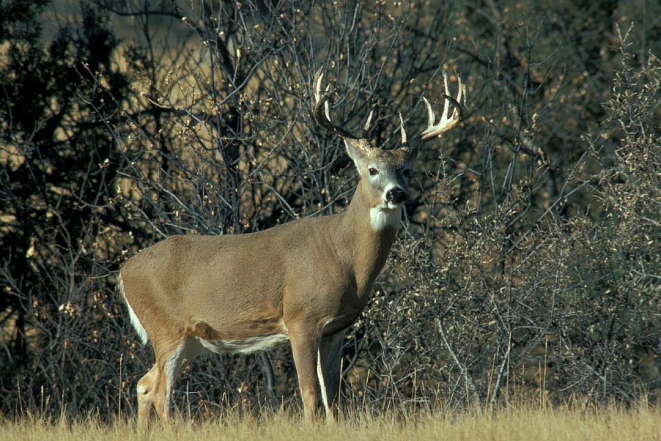 Missouri youth harvest almost 3,000 deer during late youth portion