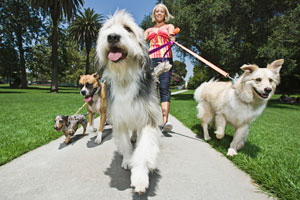 Dog ownership provides health benefits for senior adults