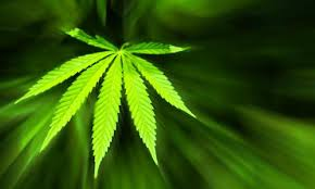 Prosecutors' lawsuit against state marijuana legalization