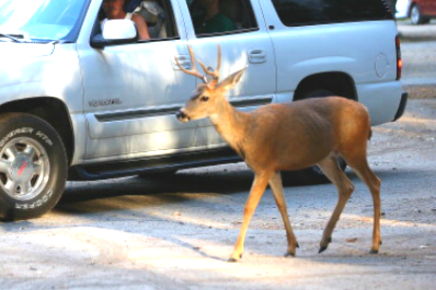 An Elderly passenger was injured during a collision with a deer