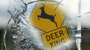 deer-crossing-shattered-glass-web-generic