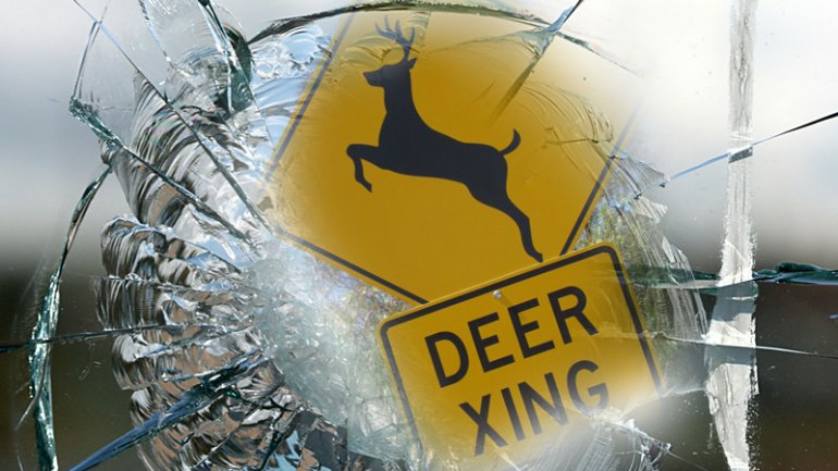 Deer in Jackson County sends Lincoln driver to hospital