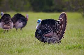 Hunters encouraged to practice safety this spring turkey season