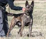 Member of Missouri Task Force 1 offering reward for missing FEMA Dog