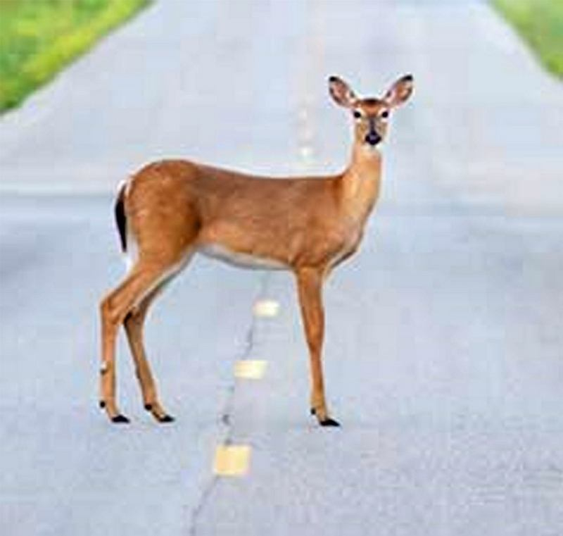Collision with deer injures passenger in Caldwell County