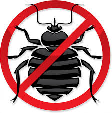 NEWSMAKER — Don't let bed bugs ruin your Summer vacation