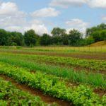 MU Extension to host farm lease meetings throughout Missouri