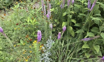 Free landscaping workshop using native plants offered by the MDC in Kansas City