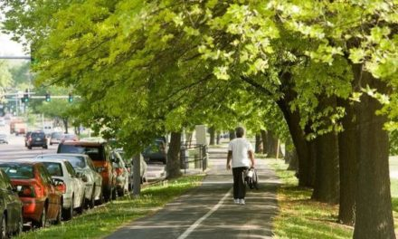 TRIM grants offered by the MDC to aid community tree care