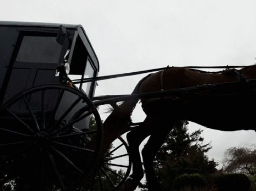 Injuries involved in horse and buggy incident