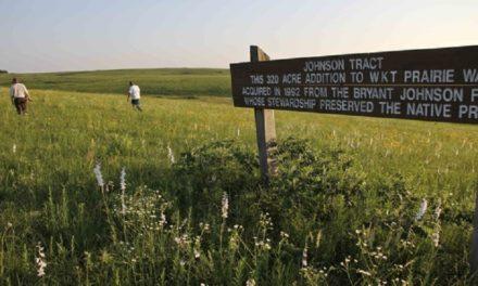 Prairie wildflowers enhance summer hikes in Missouri
