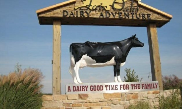 Alleged animal abuse uncovered at one of the nation's largest dairy operations