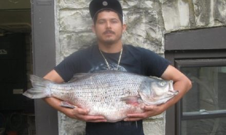 32 year-old Hybrid Bass record broken at Lake of the Ozarks