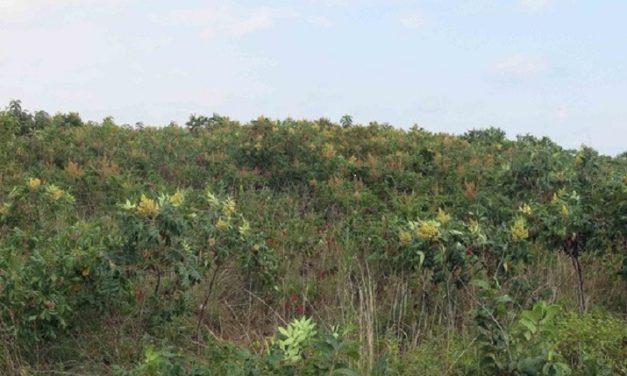 MDC provides options for grassland maintenance