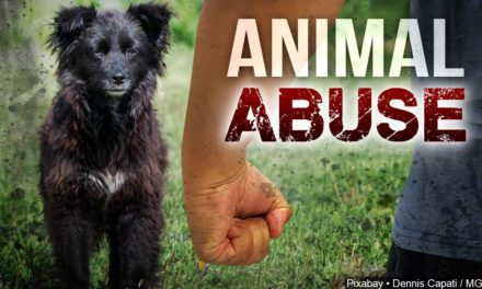 Brunswick woman faces animal abuse charges
