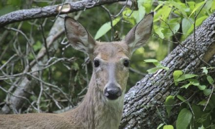 CWD symposium to be hosted by MDC in Blue Springs