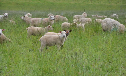 Spinning the yarn: Missouri's animal fiber industry