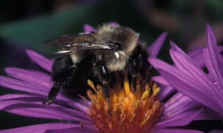 World Honey Bee Day celebrates all things Honey Bee