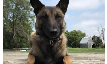 Livingston County Sheriff gives update on K9 unit