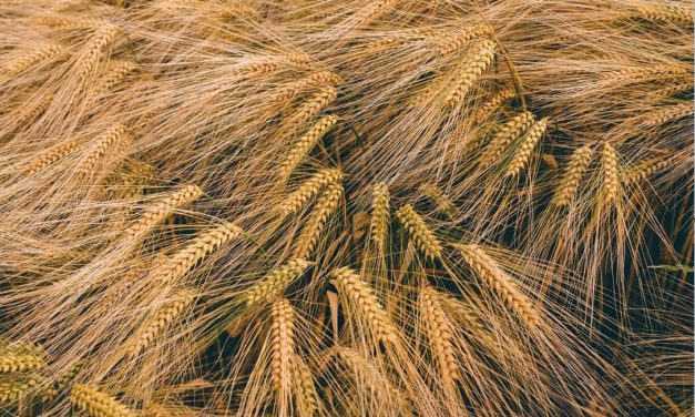 French corporation takes over Cargill's malt operations