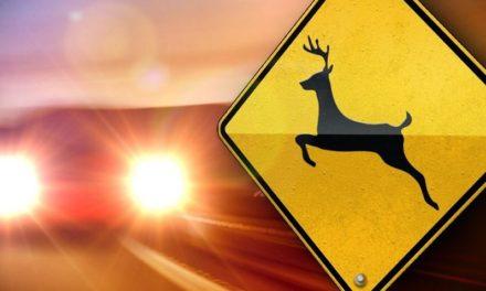 Injury crash near Breckenridge at deer crossing