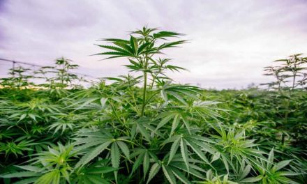 Saline County MU Extension offers free industrial hemp production event