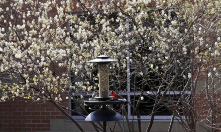 MDC recommends native species for spring planting