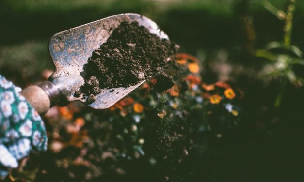 Gardening, lawn advice an email away with Johnson Co. MU Extension