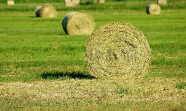 Hay Production Strategies to Improve Quality and Reduce Cattle Supplementation Next Hay Feeding Season